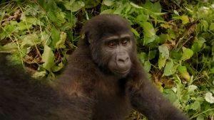 seflie gorilla vr